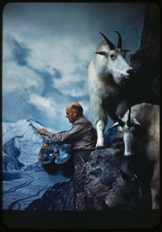 Artist Belmore Brown painting background for rocky mountain goat diorama, American Museum of Natural History