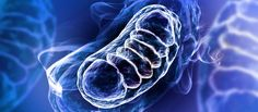 """Mitochondria isn't hypochondria's younger mischievous brother but rather """"the powerhouse of your cells."""""""
