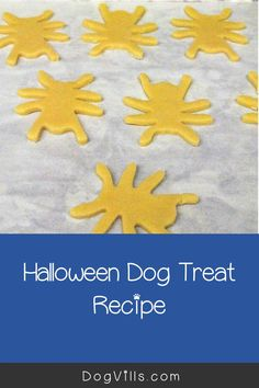 This October, celebrate your pup's most brilliant moves with these fun homemade Halloween dog treats shaped and decorated to look like vibrant spiders!