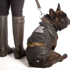 FRENCH BULLDOG & PUGS CLOTHING