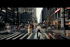 Street Zebra