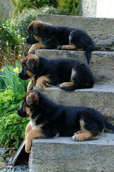 лестницы занимают ... / * ~ простые удовольствия .... Нет Нагота ~ *
