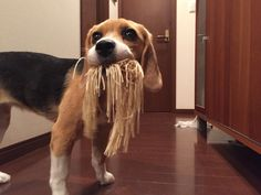 Do you like Spaghetti?