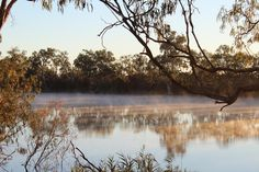 foggy morning on the Murray River in Berri, South Australia South Australia, Western Australia, Murray River, Cool Photos, Amazing Photos, Foggy Morning, Nature Scenes, Amazing Architecture, Fresh Water