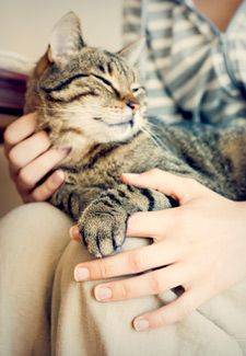 Training Your Cat to Be Handled