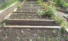 Organic Vegetable Gardening Made Easy: 3. Getting Started: Bed Preparation