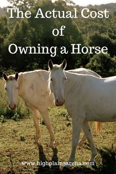 The cost of owning a horse - Horses Funny - Funny Horse Meme - - The cost of owning a horse Horses Funny Funny Horse Meme The post The cost of owning a horse appeared first on Gag Dad. The post The cost of owning a horse appeared first on Gag Dad. Horse Meme, Horse Facts, Horse Quotes, Facts About Horses, All About Horses, Buy A Horse, My Horse, How To Ride A Horse, Horse Riding Tips