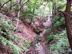 There are still a lot of ravines at Chestnut Ridge that I know exist but haven't visited yet! #ChestnutRidge #wny #OrchardPark