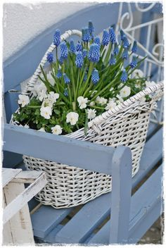 New garden country cottage benches 56 ideas White Cottage, Cottage Style, Blue Flowers, Beautiful Flowers, Pot Plante, Country Blue, Blue Springs, Spring Flowers, Shades Of Blue