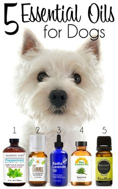 5 Essential Oils for Dogs   http://www.thelazypitbull.com/2015/09/5-essential-oils-for-dogs/