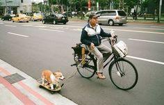 バイク 自転車 犬画像 - Google 検索