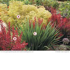 "Low-growing, drought-tolerant combo: A.  Euphorbia x martini 'Ascot Rainbow'; 18-20"" tall, zones 5-9.  B.  Berberis thunbergii 'Orange Rocket'; 48-52"" tall, zones 4-9.  C.  Crocosmia Little Redhead; red orange flowers in summer; 18-24"" tall, zones 6-9. Garden Shrubs, Shade Garden, Lawn And Garden, Garden Plants, Garden Landscaping, Drought Resistant Plants, Drought Tolerant Landscape, Orange Rocket Barberry, Shade Flowers"