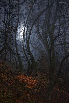 Forest Wraiths, West Virginia