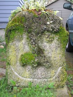 Alison O'Donoghue (photo) of moss-covered stone face