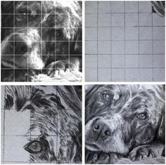 How to Transfer Any Image Using the Grid Method - Do you have a photograph, vintage print or postcard that you'd love to recreate as a painting or drawing, or use in your craft work? Learn how to transfer it with the classic Grid Method. This simple demonstration, from Learn-to-Draw-Lessons.com is about how to draw a dog. But, the principals are the same for any image you want to use and any media you like.