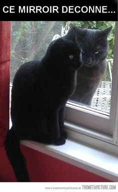 Are you looking for really funny black cat memes? Look no further, we've gathered funny black cat memes just for you to share on your social media accounts Funny Animal Jokes, Funny Cat Memes, Cute Funny Animals, Cute Baby Animals, Cute Cats, Funny Humor, Cat Jokes, Funny Kitties, Adorable Kittens