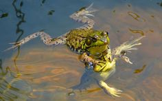 """""""My head is not a lilypad!"""" Comedy Wildlife Photography"""