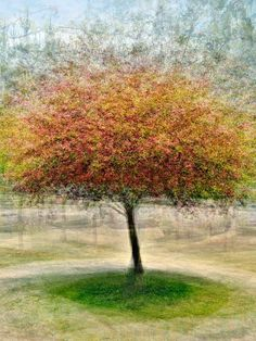 Pep Ventosa's series he calls In the Round - Trees. Though they first appear like impressionist paintings, you'd be surprised to find out that they're actually dozens of photographs of the same tree merged into one.