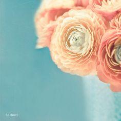 A Work in Progress: Flower Power: Ranunculus Peach Flowers, Diy Flowers, Beautiful Flowers, Wedding Flowers, Ranunculus Flowers, Peonies, Paper Flowers, Blue Peach, Bouquet