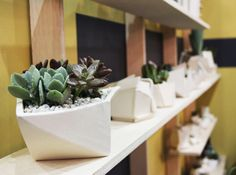 MilkWeed: The Best Green at Dwell on Design