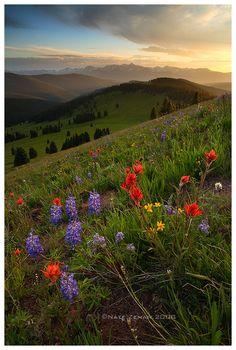 Shrine Ridge - White River National Forest - Colorado