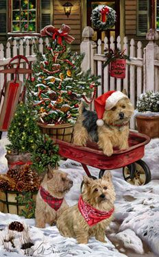 """New for 2014! Norwich Terrier Christmas Holiday Cards are 8 1/2"""" x 5 1/2"""" and come in packages of 12 cards. One design per package. All designs include envelopes, your personal message, and choice of greeting. Select the inside greeting of your choice from the menu below.Add your custom personal message to the Comments box during checkout."""