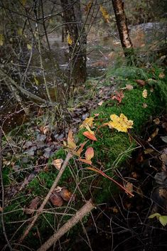 Autumn 🍂 Colours, Autumn, Explore, Photography, Photograph, Fall, Fotografie, Photo Shoot, Exploring