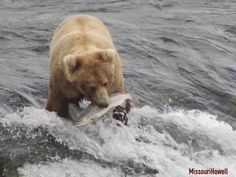 When I got invited to Alaska, one of the first things I did was check a map and figure out where King Salmon was Katmai National Park, National Parks, Backpacking, Camping, King Salmon, Brown Bear, Alaska, Map, Adventure