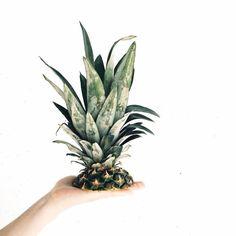Pineapple Pineapple, Fruit, Instagram, Food, Pine Apple, Essen, Meals, Yemek, Eten
