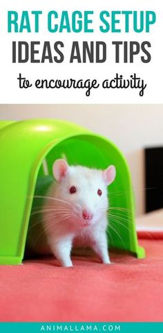 Most rat cages come with a few basics like shelves, a hammock and maybe a house. However, these are rarely enough to keep rats entertained. So, what kind of rat cage setup and layout will keep your rats active and entertained? Take a look at these rat cage setup ideas and tips! #rat #petlovers #pets