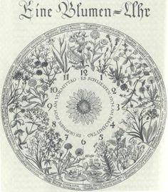 Horologium florae. Chronobiology aesthetics: The Flower Clock Garden of Carl von Linné in Philosophia Botanica 1751.