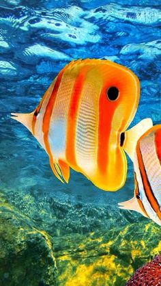 Colorful tropical fish.