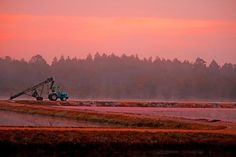 The cranberries await harvest on an early Pine Barrens morning. Photography Website, Fine Art Photography, Cranberry Bog, New Jersey, East Coast, Great Artists, My Images, Fine Art America, Scenery