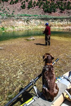 Fly fishing with Chocolate Lab....Doesn't get much better then that!!!