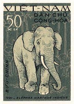 elephant,tusk,trunk,asian elephant,vietnam,maximus,zoo,indochina,vintage,postage,stamp,postal,ephemera,fauna