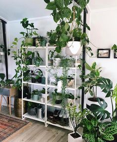 "631 Likes, 14 Comments - Goddess Provisions (@goddessprovisions) on Instagram: ""Ok, we have some major room envy!  We are just loving all the green from all the plants! Looks…"""