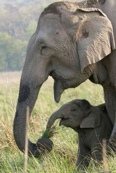 How very precious is the love and joy they feel for one another.  Shining example of God's love toward all His creatures.