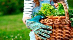 Articles - Cour et jardin