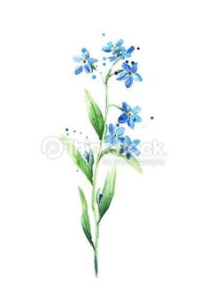Forget me not flower by zhanna smolyar via shutterstock do it forget me not flower by zhanna smolyar via shutterstock do it pinterest flower tattoo and tatting ccuart Image collections
