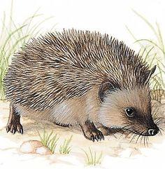 Little hedgehog by ELINA CHERIANIDOU - Google zoeken