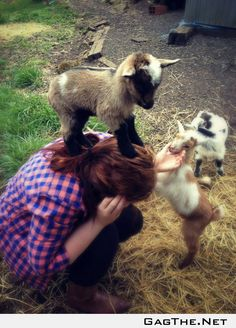 Baby goat conquers human.