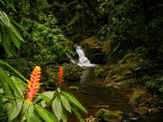Ecological Park Spitzkopf - Blumenau, Santa Catarina