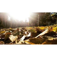 🍁🍂 #autumn #leaves #sunday #sunnyday #latergram #fall
