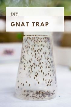 How do you get rid of gnats? If these pests have invaded your home, learn how to get rid of gnats in the house with this homemade gnat trap Homemade Gnat Trap, Diy Gnat Trap, Gnat Traps, House Cleaning Tips, Cleaning Hacks, How To Get Rid Of Gnats, Get Rid Of Flies, Fruit Flies, Kitchen Hacks