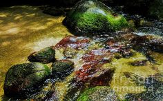 Rock Pool in Mossman Gorge. A collection of fine art photography images from Far North Queensland's Wet Tropics and Daintree. A UNESCO World Heritage Listed site. Add a splash of the TROPICS and SOOTHING WATER. Visit my photo gallery and get a beautiful Fine Art Print, Canvas Print, Metal or Acrylic Print OR Home Decor products. 30 days money back guarantee on every purchase so don't hesitate to add some WILD TROPICS in your home.