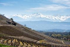 Les vins de Savoie puisent leurs origines dans l'Antiquité. Entre #montagnes et rives du lac du Bourget, parcourez la route des vins de #Savoie sur les traces du savoir-faire local. #Belambra #Blog #Vin