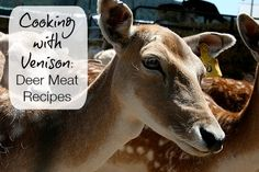 Deer is nutritious, bountiful and a relatively free source of meat
