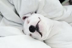 Lance here. I am looking at Ms. Jenaia and wondering where my white down comforter is. I am sure my beautiful black coat would look lovely against one of these. Sweet dreams pittie buddy.