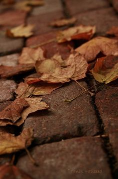 Brown Autumn Leaves by Tani L~aplseed Autumn Aesthetic, Brown Aesthetic, Aesthetic Themes, Autumn Day, Autumn Leaves, Late Autumn, Hello Autumn, Organizar Feed Instagram, Earth Tones
