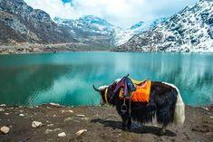 brings the Best of Darjeeling Gangtok Holiday Tour Packages and the Best of Darjeeling Gangtok Honeymoon Tour Packages,. Honeymoon Tour Packages, Honeymoon Places, Honeymoon Destinations, Jungle Resort, Valley Of Flowers, Gangtok, Northeast India, Walking In Nature, India Travel